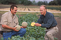 Melon grower from Starr Produce and plant physiologist examine market quality of commercially grown cantaloupe: Click here for full photo caption.