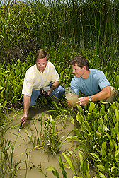 Ecologist and University of Mississippi collaborator examine water quality in a vegetated drainage ditch in the Delta: Click here for full photo caption.