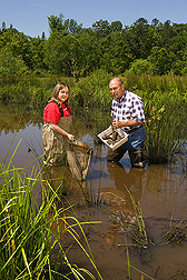 Technician and ecologist sample small invertebrates found in wetlands and ditches: Click here for full photo caption.