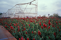 Crimson clover in front of four 10-foot-tall growth chambers that expose plants to varying levels of atmospheric carbon dioxide. Link to photo information