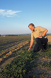 Photo: Plant physiologist Dale Shaner examines weeds a in a corn field. Link to photo information