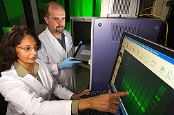 Chemist and geneticist search for new tung oil biosynthetic genes by analyzing PCR gel-banding patterns: Click here for full photo caption.