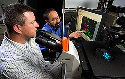 Biologist (left) and physiologist observe primary hippocampal neurons using fluorescent microscopy and real-time calcium imaging to determine the effects of blueberry polyphenol treatments in protecting against oxidative and inflammatory stress: Click here for full photo caption.