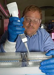 Veterinary medical officer processes Leptospira cultures for plasmid preparation: Click here for full photo caption.