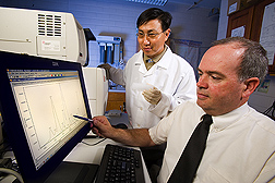 Using an automated sequencer, molecular biologist (left) and entomologist study DNA samples from a boll weevil to identify the weevil's origin: Click here for full photo caption.