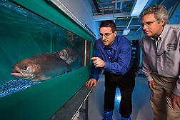 Molecular biologists examine breeders in the selective breeding program at the National Center for Cool and Cold Water Aquaculture: Click here for full photo caption.