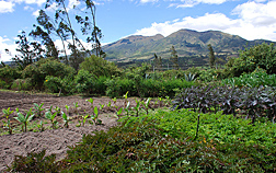 The ethnobotanical garden near Cotacachi will educate local schoolchildren and tourists about native crop diversity: Click here for photo caption.