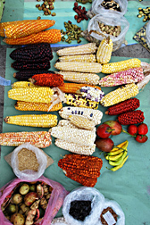 Photo: Display of traditional Ecuadorian varieties of maize, beans, peppers, and tree tomatoes. Link to photo information