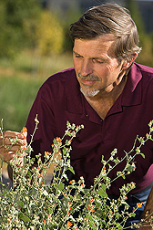 Entomologist examines wildflowers in a Logan, Utah, test plot: Click here for full photo caption.
