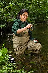 University of Maryland PhD student collects water samples for pesticide and antibiotics analyses in a stream within the Choptank River Watershed: Click here for full photo caption.