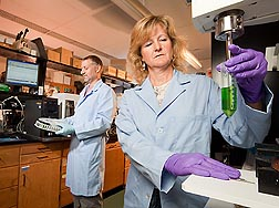 Support scientist Susan Watson extracts a sample of pigments from leaf tissue for high-performance liquid chromatography analysis by plant physiologist Franck Dayan: Click here for full photo caption.