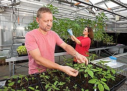 Photo: ARS plant physiologist Franck Dayan and Mississippi State University graduate student Daniela Ribeiro observe plants for reaction to herbicides. Link to photo information