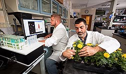 Horticulturist Joseph Albano (right) measures chlorophyll levels in leaves of marigolds treated with the chelating agent EDDS, and technician Chris Lasser measures iron levels in iron chelate samples: Click here for photo caption.