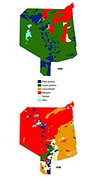 Maps of the Jornada Experimental Range show that grasses covered more than 80 percent of the land in 1858 (top) but covered only about 15 percent by 1998 (bottom): Click here for full photo caption.