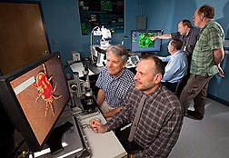 In the ARS Electron and Confocal Microscopy Unit, in Beltsville, Maryland, (left to right) support scientist Charlie Murphy and entomologist Ron Ochoa observe a red velvet mite with a digital video camera microscope while lab director Gary Bauchan, plant pathologist John Hammond, and IT specialist Chris Pooley use a confocal laser scanning microscope to view tobacco leaves after gene insertion: Click here for photo caption.