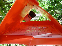 The small vial suspended in this monitoring trap dispenses an insect lure.