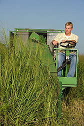 In Nebraska, technician Marty Schmer harvests switchgrass to evaluate yield.