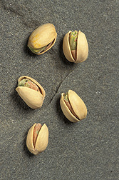 New lures that ARS scientists are formulating may help growers keep pistachios (shown), almonds, and walnuts safe from navel orangeworms.