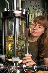 Chemical engineer Patricia Slininger prepares a culture medium in a fermentor. Click here for full photo caption.