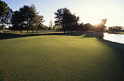 Turfgrass at park