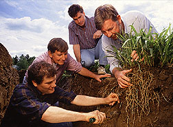 Scientists excavate gamagrass roots