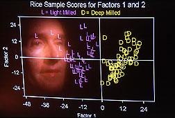 Food scientist William Windham analyzes rice texture.