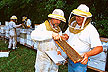 Scientists inspect colonies of Russian honey bees.
