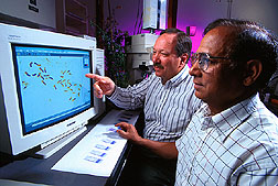 Gary Bauchan and M. Azhar Hossain use a computerized image analysis system to identify banding patterns on alfalfa chromosomes.