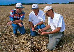 Scientists inspect the root system of a cotton plant sown into a rye cover crop.