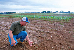 Cotton specialist checks rotation plots. Click here for full photo caption.