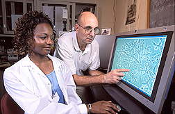 Scientist Gary Samuels and student Lutorri Ashley discuss morphology of  Trichoderma harzianum:  Link to photo information
