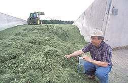 Agricultural engineer takes forage samples: Click here for full photo caption.