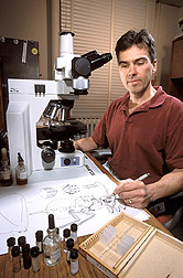 Entomologist illustrates details of an adult male scale insect: Click here for full photo caption.