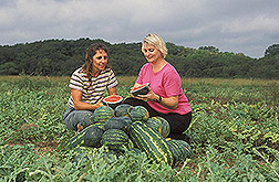 Photo: Lab, technician Shelia Magby (left) and plant physiologist Penelope Perkins-Veazie examine a freshly sliced mini-watermelon. Link to photo information