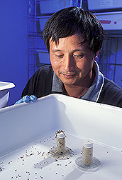 Entomologist checks the repellency of specific compounds: Click here for full photo caption.