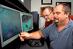 Two entomologists examine fire ant mounds in an airborne digital image: Click here for full photo caption.