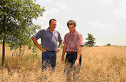 Agronomist and forester examine a cover crop of redtop grass: Click here for full photo caption.
