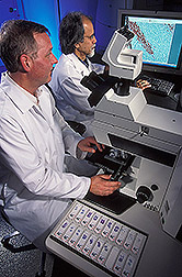 Two veterinary medical officers examine prion distribution in brain tissue: Click here for full photo caption.