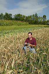 Research leader examines a plot of barley interseeded with red clover: Click here for full photo caption.