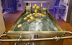 Cantaloupes being surface-pasteurized in a commercial-scale dump tank. Link to photo information