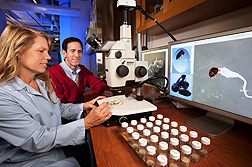 Scientists review coffee borer images. Link to photo information