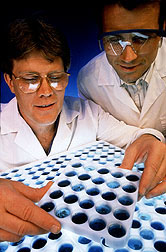 A Biochemist (left) and a plant breeder analyze hybrid corn samples.