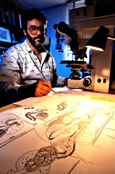 Zoologist Eric Hoberg makes detailed drawings of a previously unknown tapeworm.