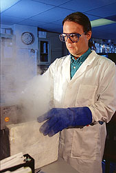 To analyze genes in potatoes, William Belknap prepares potato tissue under liquid nitrogen.
