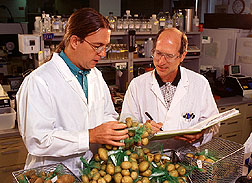 William Belknap and Paul Allen catalog potatoes