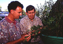 Researcher Matthew Purcell and entomologist Gary Buckingham