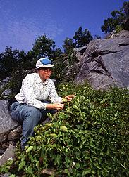 Botanist Diane Pavek