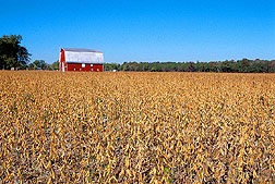 Field of soybeans. Link to photo information