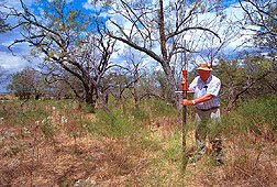 Ecologist takes a soil core sample in grassland invaded by honey mesquite.