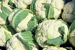 Cauliflower: Click here for full photo caption.